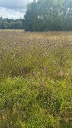 Meadow Plumberow